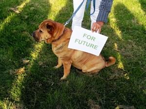 Thumbnail Hund for future